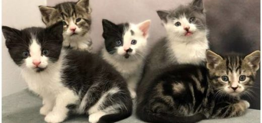 cat pregnancy guide